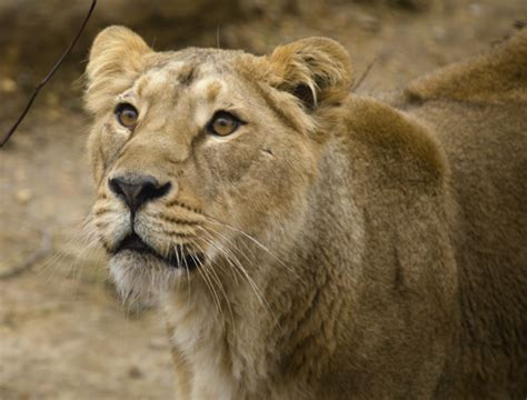 Buy London Zoo Tickets Online Today - AttractionTix